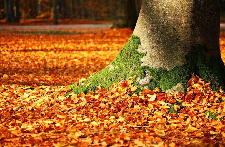 Vremea pe 13 noiembrie. Prognoza meteo pentru weekend