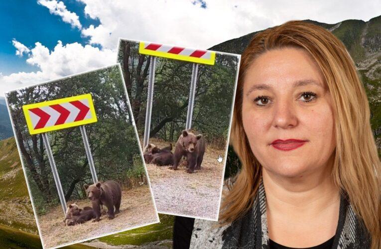 """Diana Șoșoacă, întâlnire de gradul 0 cu urşii, la munte. """"Sunt periculoşi"""""""